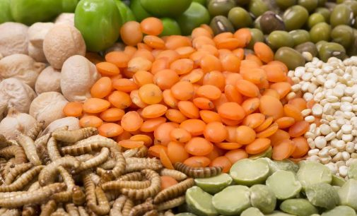 Are Sustainable Proteins Nutritious Enough?