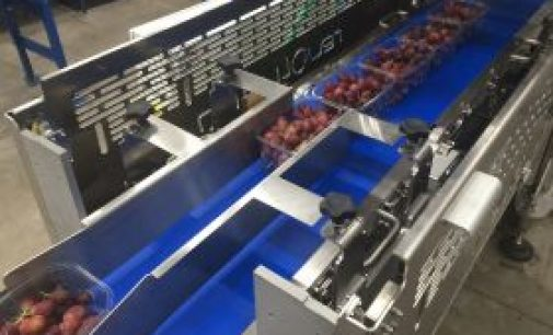 New packaging machinery for grapes cuts costs and reduces environmental impact
