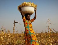 Nestlé and USAID Partner For High Quality Maize in Ghana