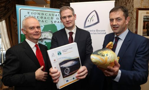 New Research Reveals New Information About Sea Trout in Irish Sea