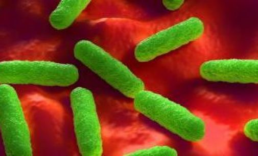 Antimicrobial Resistance in Europe Remains High