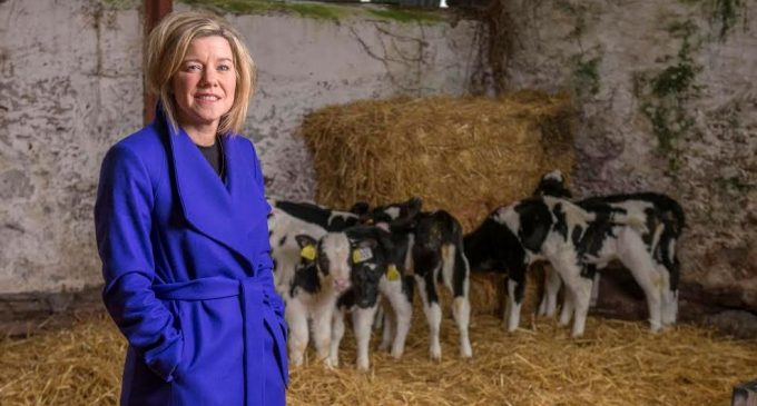 University College Cork Appoints New Head of Food Business