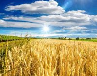 Organic Starches to Meet Growing Food Industry Demand