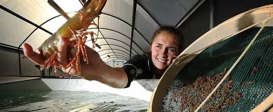 Seafood DNA Traceability Programme to Guarantee Greater Levels of Transparency