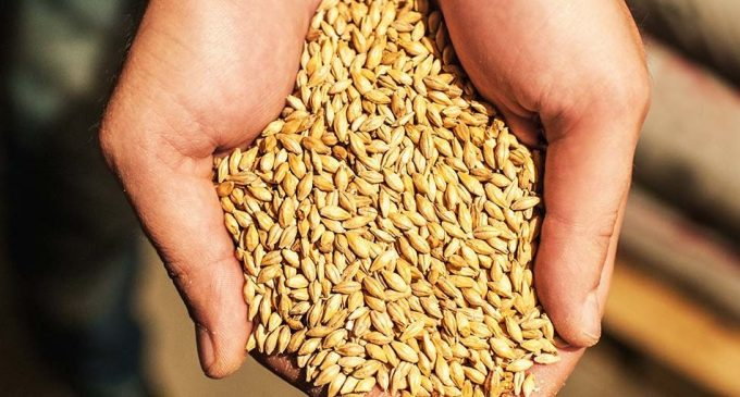 Cargill to Establish New European Logistics Platform For Malt