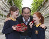 Keelings Celebrates Harvest of First Irish Strawberries