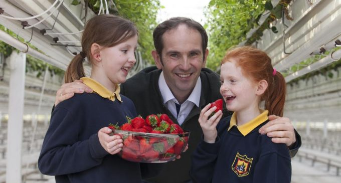 Keelings Celebrates Harvest of First Irish Strawberries