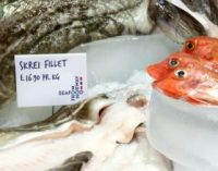 Norwegian Seafood Exports Break New Records