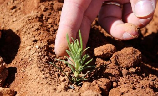 Field-to-Fork Organic Rosemary Solutions From Frutarom