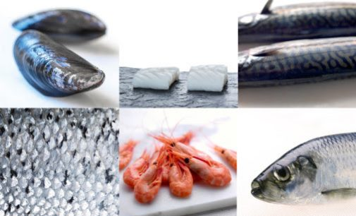 Norwegian Seafood Exports Reach Record-high