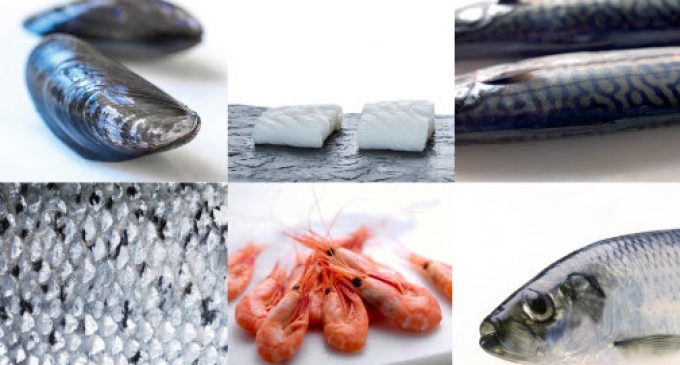Norwegian Seafood Exports Grow by 13% in May