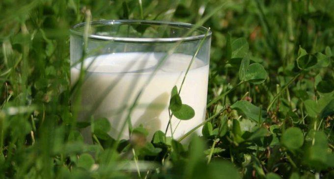 Arla Foods Builds on Success of Organic Milk Launch