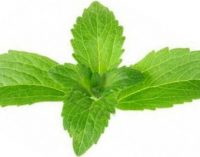 Stevia sweetener variant is 20 times more potent