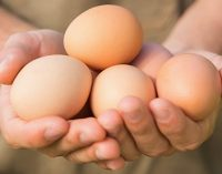 Nestlé to Source Only Cage-free eggs by 2025