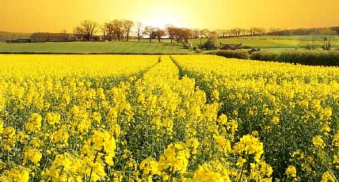 Cargill Introduces the Lowest Saturated Fat, High Oleic Commercial Canola Oil