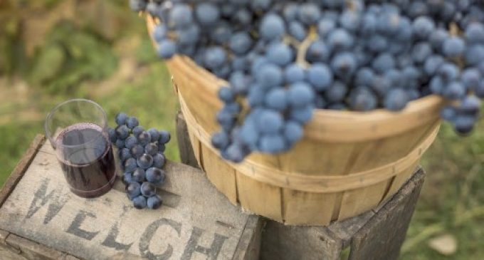 2018 Could be the Year of the Concord Grape