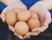 Morrisons Expands Food Production Base