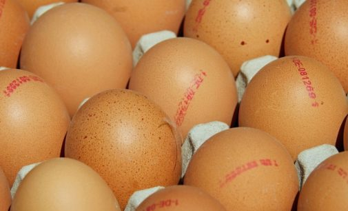 What Eggs Can Teach Us About Traceability