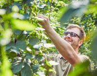 Brook House Hops to Sell Direct to UK Brewers