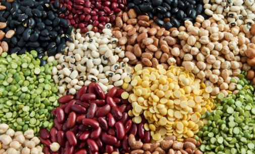 Report Finds Growth Potential For EU Plant Proteins