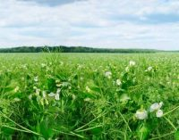 Roquette and Barentz Confirm Strong Future Partnership in Food in Europe