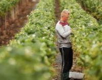 European Commission Increases National Support to Farmers up to €25,000