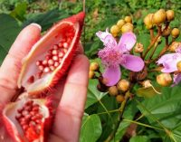 Annatto Colour Certified Organic For IFF's Frutarom Division
