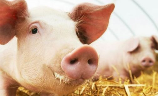 Noble Foods and Cranswick Recognised as Global Leaders on Farm Animal Welfare