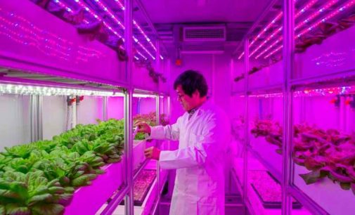 Vertical 'Container Farms' Can Produce Bigger and Better Natural Crops