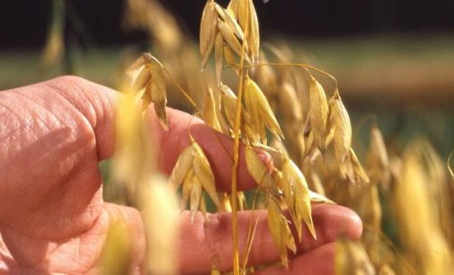 Finland Takes Action to Enhance Protein Self-sufficiency