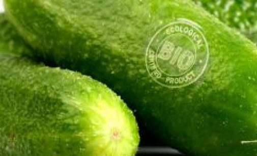 Increasing Demand For Laser Coders From Fruit and Vegetable Producers
