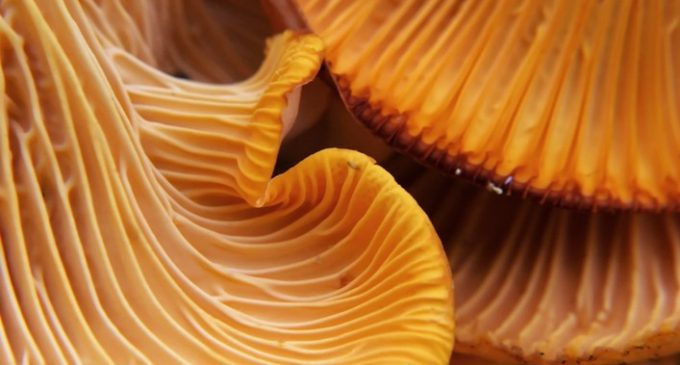 Kerry Health & Nutrition Institute White Paper Unravels the Science Behind Umami