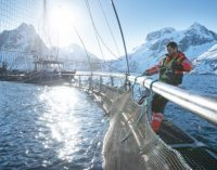 Norwegian Salmon Ranked Most Sustainable Among World's Largest Protein Producers