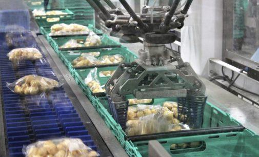 Brillopak's Fresh Produce Packing Robot Wins Innovation Award