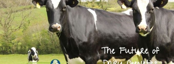 Research Shows Significant Dairy Beef Carbon Reduction Potential