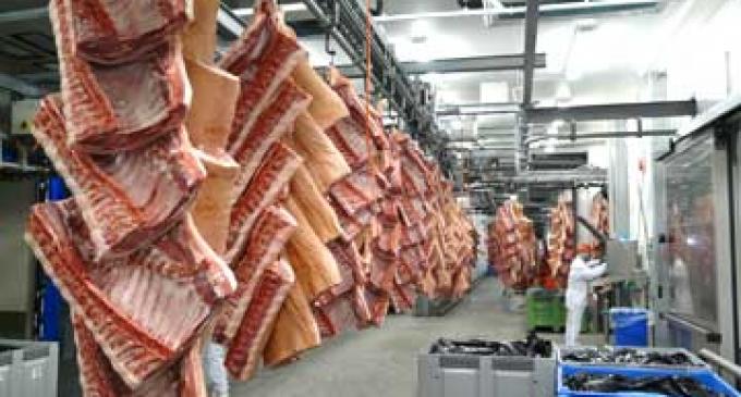 Vion Builds a Strong Foundation Despite a Challenging Market