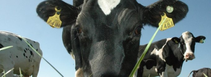 An Analysis of the Irish Dairy Sector Post Quota – Lowest Milk Price But Highest Margin