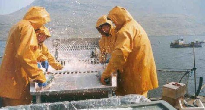 Ireland to Host Global Accelerator Programme For Aquaculture