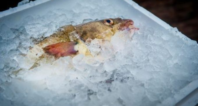 Hilton Food Group to Move into UK Fish Processing