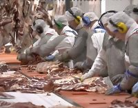 Kepak Group Acquires 2 Sisters UK Red Meat Business