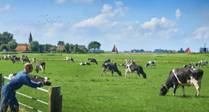 FrieslandCampina Increases Outdoor Grazing Cows in Dairy Farms