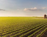 Pesticides in Food – Latest Figures Remain Steady