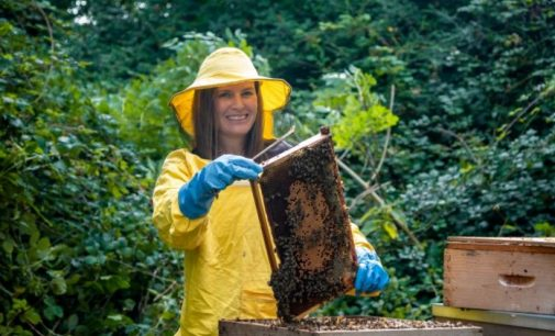 Irish Heather Honey Buzzing With Health