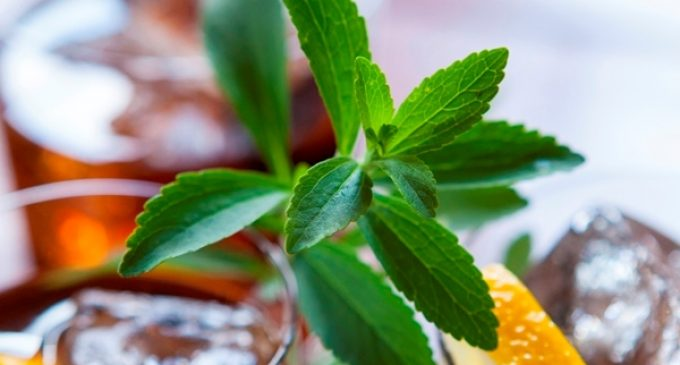 Tate & Lyle and Sweet Green Fields Unveil Latest Stevia Innovation