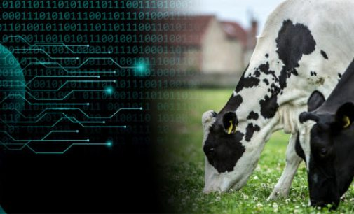 New Artificial Intelligence Tool Predicts How Much Milk 1.5 Million Cows Will Produce