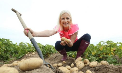 """Bord Bia Drive to Make Potatoes More """"Insta-friendly"""" With the Millennial Consumer"""