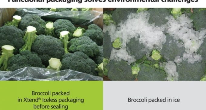 StePac – Taking Broccoli Packaging Out of the Ice Age