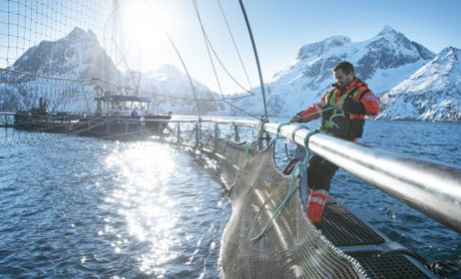 Norwegian Seafood Industry Prepares For a New Reality