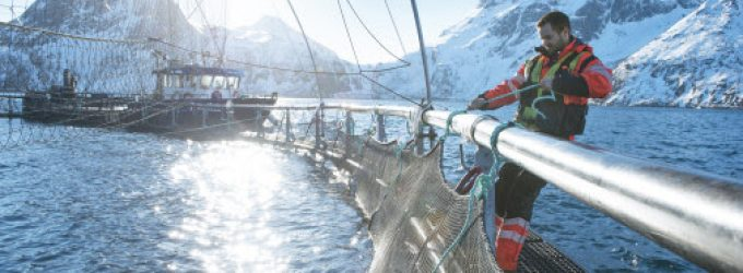Weak Norwegian Kroner Leads to Best Ever First Half Year For Norway's Seafood Exports