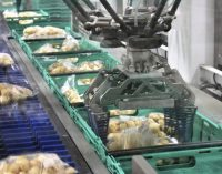 Brillopak's UniPaker Handles 66 Million Kilos of Potatoes a Year For Morrisons